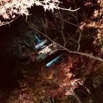97327494 - 永観堂ライトアップ