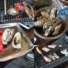 かき焼き 塩見園 - 料理写真: