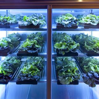 野菜専用冷蔵庫で鮮度と味を保って美味しい野菜を提供します!