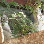 よしの瀬 - お庭では兄弟ニャンコが戯れてました