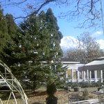 977084 - 富士山とクリスマスツリー