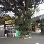 みかどパン店 - お店と大木