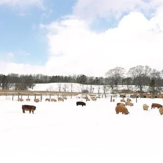 """放牧飼育による""""こな雪とんとん""""という極みの豚を使用"""