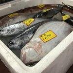 魚魚魚 -