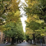 喫茶ルオー - その他写真:東大のいちょう並木