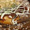 えん - 料理写真:お好み焼き