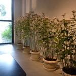 VADE MECVM showroom#2 - 絶滅危惧種の「フジバカマの原種」花がカワイイ!