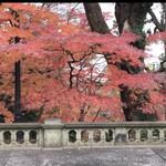 綱町三井倶楽部 - この時期に紅葉がきれいなんです
