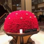 99031333 - クリスマスの薔薇