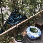 根津 釜竹 - メダカの睡蓮鉢