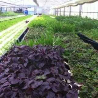 種類たくさん!埼玉三郷市提携農家直送無農薬野菜が食べ放題!
