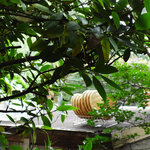NISHIann cafe - ざるは〜お庭で自然乾燥