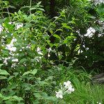 NISHIann cafe - お庭は〜まるでミニ植物園