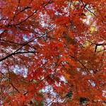 365日 - おまけ:代々木公園の紅葉