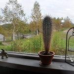 リーズカフェ - 奥様が種から育てたサボテン