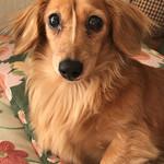 99399032 - さらば戌年♪  愛犬メリーは元気です!(オミセとは関係ありません)