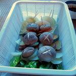 五宝平自然園 - 野菜
