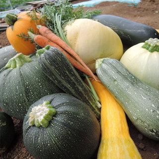 青木農園から直送♪旬を楽しむ新鮮な朝採れ有機野菜◎