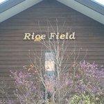 ライスフィールド - Rice Field@色麻町