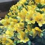 好餃子 - お花屋さんではもう春の花
