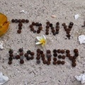 tonyhoney