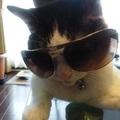 無職の野良猫