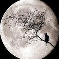 14th moon