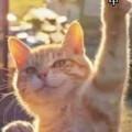 mi_tsuki