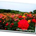 chocolat_mint
