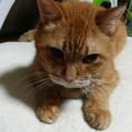 ぽんぽこ猫