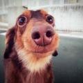 marron_doggy
