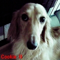 Cookie0307