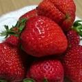 苺イチゴいちご