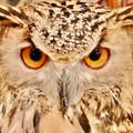 OWL1964