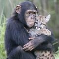高木チンパンジー